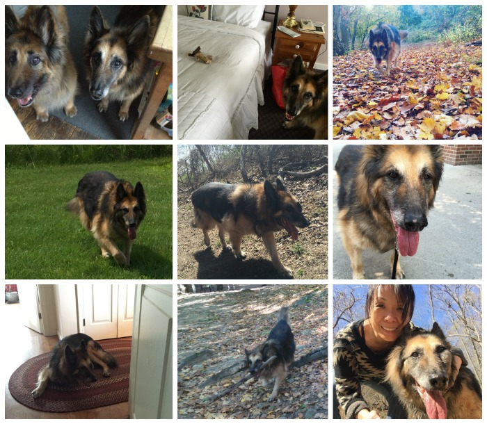 roscoe collage