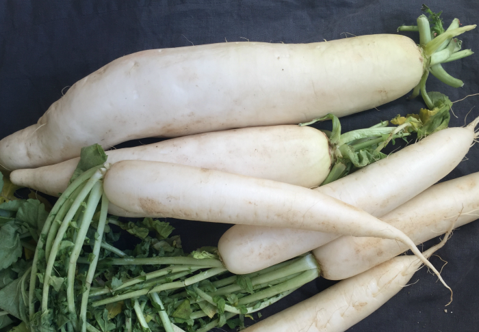 Daikon comes in many sizes