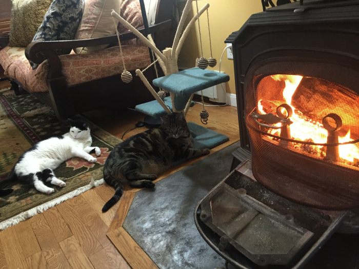 My cats enjoying our wood stove