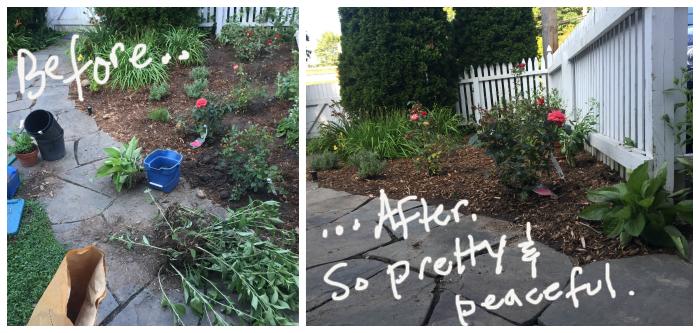 Planting a rose garden